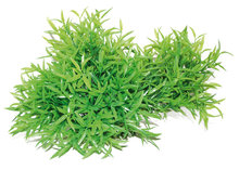 Kunststof planten